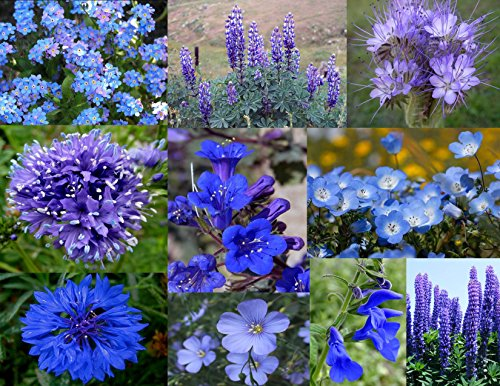 Bamboo Cove Farm Seeds Annuals & Perennials