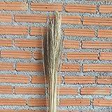 Leewadee Dried coloured palm leaf bunch for floor vases decorative grass twig bunch, 120 cm, Palm Leaf, ecru