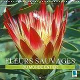 fleurs sauvages du monde entier 2017 les parentes sauvages de nos fleurs de jardin et de nos fleurs en pot calvendo nature french edition