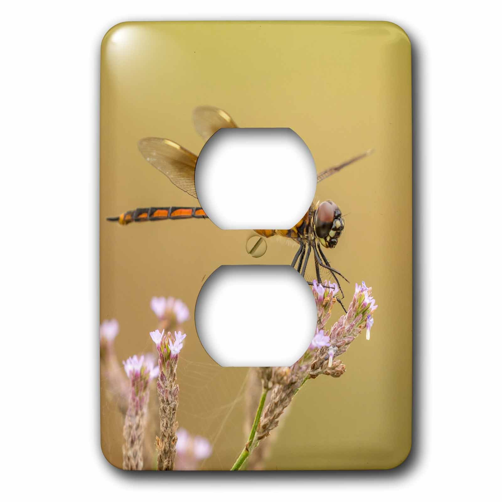 3dRose Danita Delimont - Insects - USA, Louisiana, Millers Lake. Dragonfly on flower. - Light Switch Covers - 2 plug outlet cover (lsp_259372_6) by 3dRose