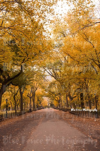 Autumn Photography, Elm Trees, Golden Leaves, The Mall, Central Park, Tree Print, Nature Art, Fall Leaves, Rustic Decor, Wall Art, Sizes Available from 5x7 to - The Mall Park Orange