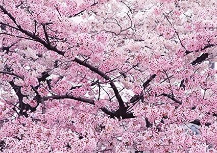 Amazon com: Hot Sale!!! 10 pieces/pack Pink Cherry Blossoms