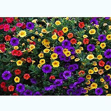 100 unids/pack que las semillas de petunia color mezclado olas hermosas flores por planta