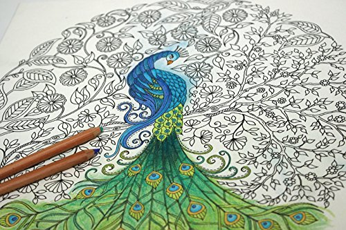 amazoncom johanna basford secret garden coloring canvas peacock arts crafts sewing