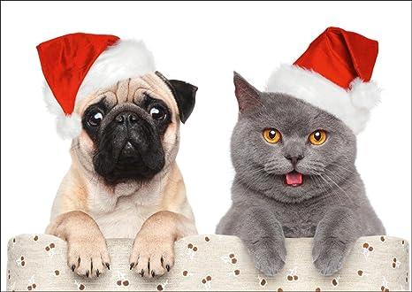 Immagini Divertenti Animali Natale.10 Cartoline Di Natale Divertenti Con Cane E Gatto Di Edition Colibri 10642 Amazon It Cancelleria E Prodotti Per Ufficio