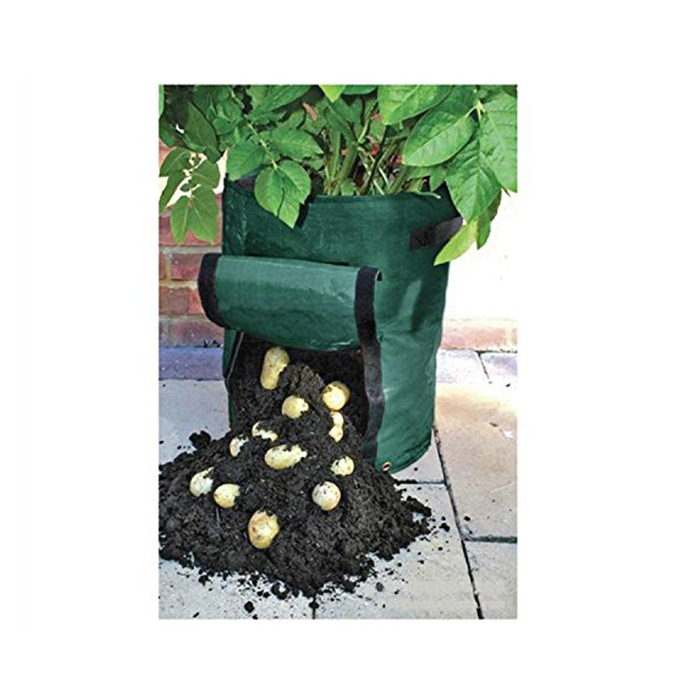 Winning Bq Grow Your Own Pea  Bean Vegetables Crops Flower Plant Herbs  With Licious Amgateeu Garden Potato Grow Bag Vegetables Planter With Access Flap For  Harvesting  Ecofriendly With Beauteous Apex Garden Shed Also Haze Garden Centre In Addition Gardens In York And Greenhouse Water Gardens As Well As Clanricarde Gardens Additionally Cheap Raised Garden Beds From Amazoncouk With   Licious Bq Grow Your Own Pea  Bean Vegetables Crops Flower Plant Herbs  With Beauteous Amgateeu Garden Potato Grow Bag Vegetables Planter With Access Flap For  Harvesting  Ecofriendly And Winning Apex Garden Shed Also Haze Garden Centre In Addition Gardens In York From Amazoncouk