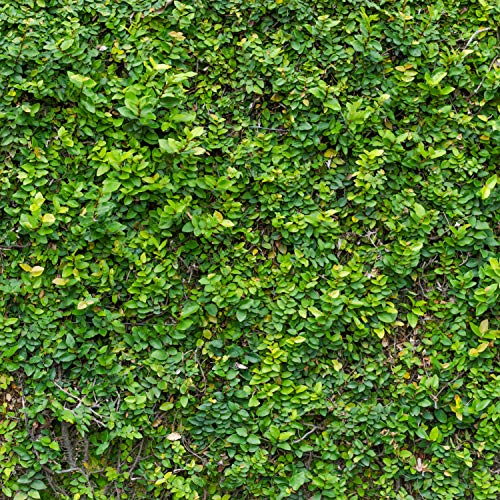 Green Grass Wall Backdrop Bush Lawn Wall Leafy Leaves Wall Printed Fabric Photography Background (G0824, 10' Wide by 10' Tall)