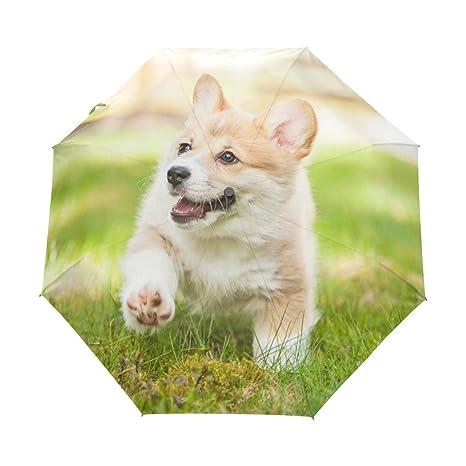 Amazon Com Naanle Corgi Puppy Dog Running On Spring Grass Auto Open
