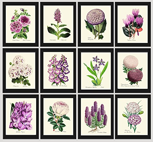 Flower Print Set of 12 Prints Antique Beautiful Botanical Flowers Wildflowers