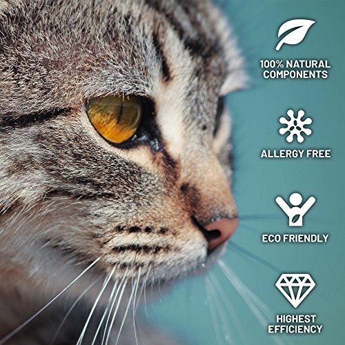 Flea Collar for Cats - MADE IN GERMANY - Tick Collar - Cat Flea and Tick Control for 8 Months - Flea and Tick Prevention for Cats - Waterproof Flea Treatment - Safe & Hypoallergenic -One Size Fits All