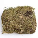Factory Direct Craft 12 Cups of Natural Preserved and Dried Sheet Moss for Crafting, Fairy Gardens, and Terrariums