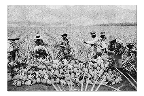 Pineapple Plantation in Hawaii - Vintage Photograph (20x30 Premium 1000 Piece Jigsaw Puzzle, Made in USA!) ()