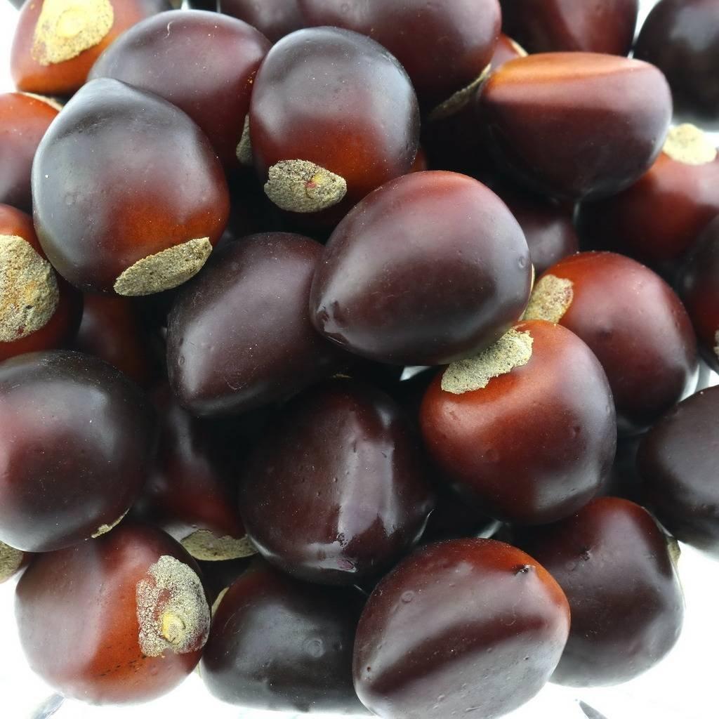 Gresorth 50 PCS Artificial Chestnut Fake Nuts Lifelike Model Home Kitchen Decoration by Gresorth