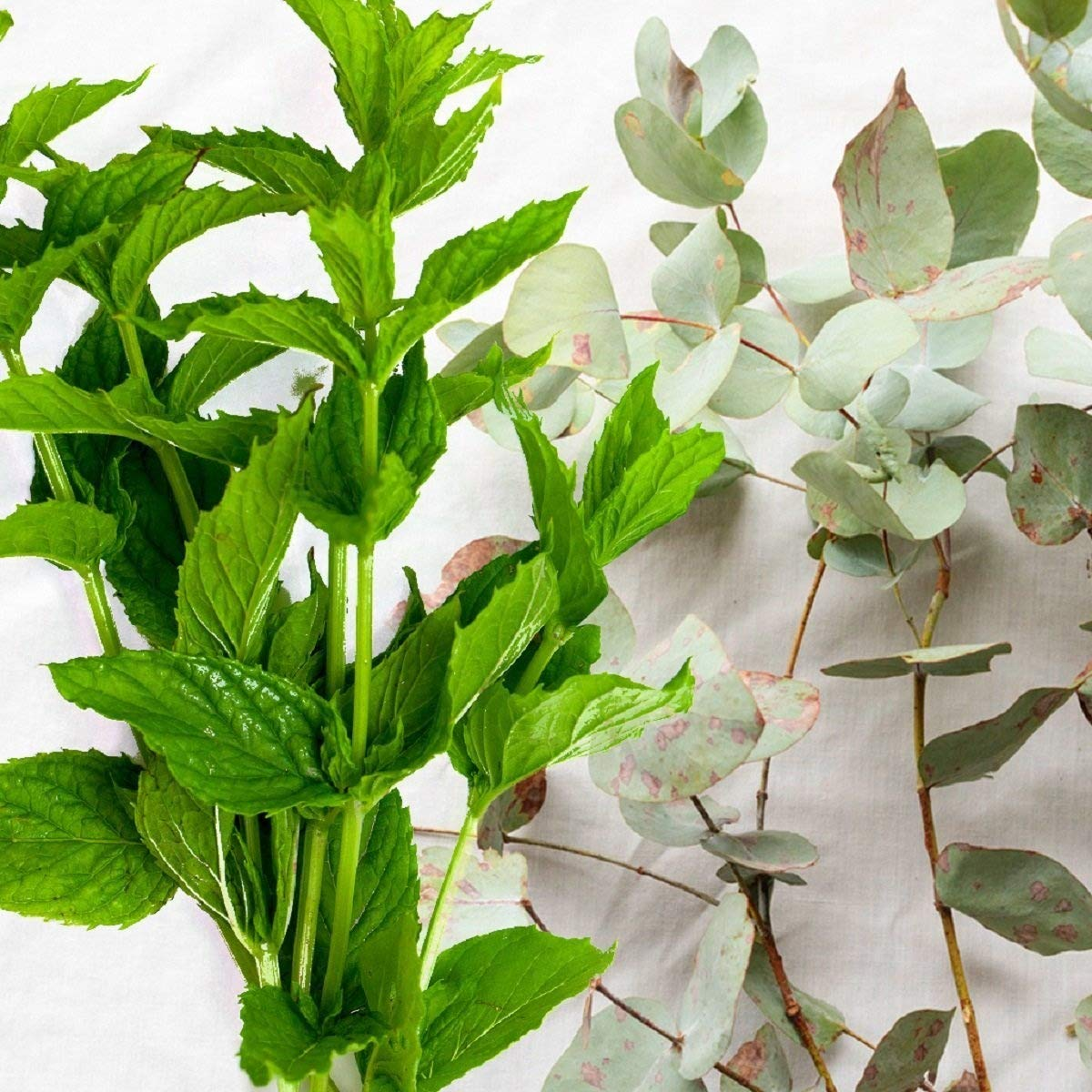 SPEARMINT EUCALYPTUS FRAGRANCE OIL - 16 OZ/ 1 LB - FOR CANDLE & SOAP MAKING BY VIRGINIA CANDLE SUPPLY - FREE S&H IN USA