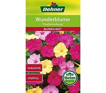Dehner Blumen Saatgut Wunderblume Prachtmischung 5er Pack 5 X 3