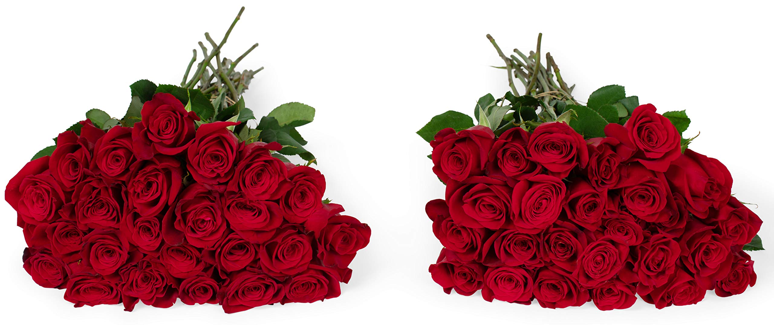 Benchmark Bouquets 50 Red Roses Farm Direct (Fresh Cut Flowers) by Benchmark Bouquets