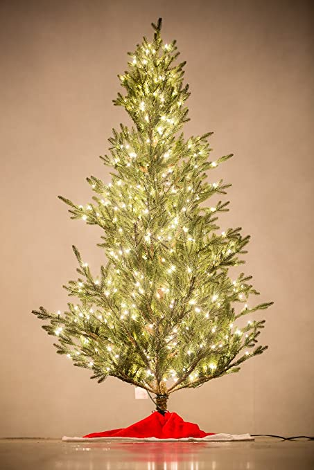 Amazoncom Holiday Bright Lights 75 Feet Tall Fresh Cut Tree Slim