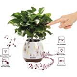 Music Flower Pot, Wireless Bluetooth Speaker, LED Light Smart Touch Music Flower Pot by Envolve, Multicolor Night Light, Play Piano Music on a real plant with colorful LED lights (Plant not included)