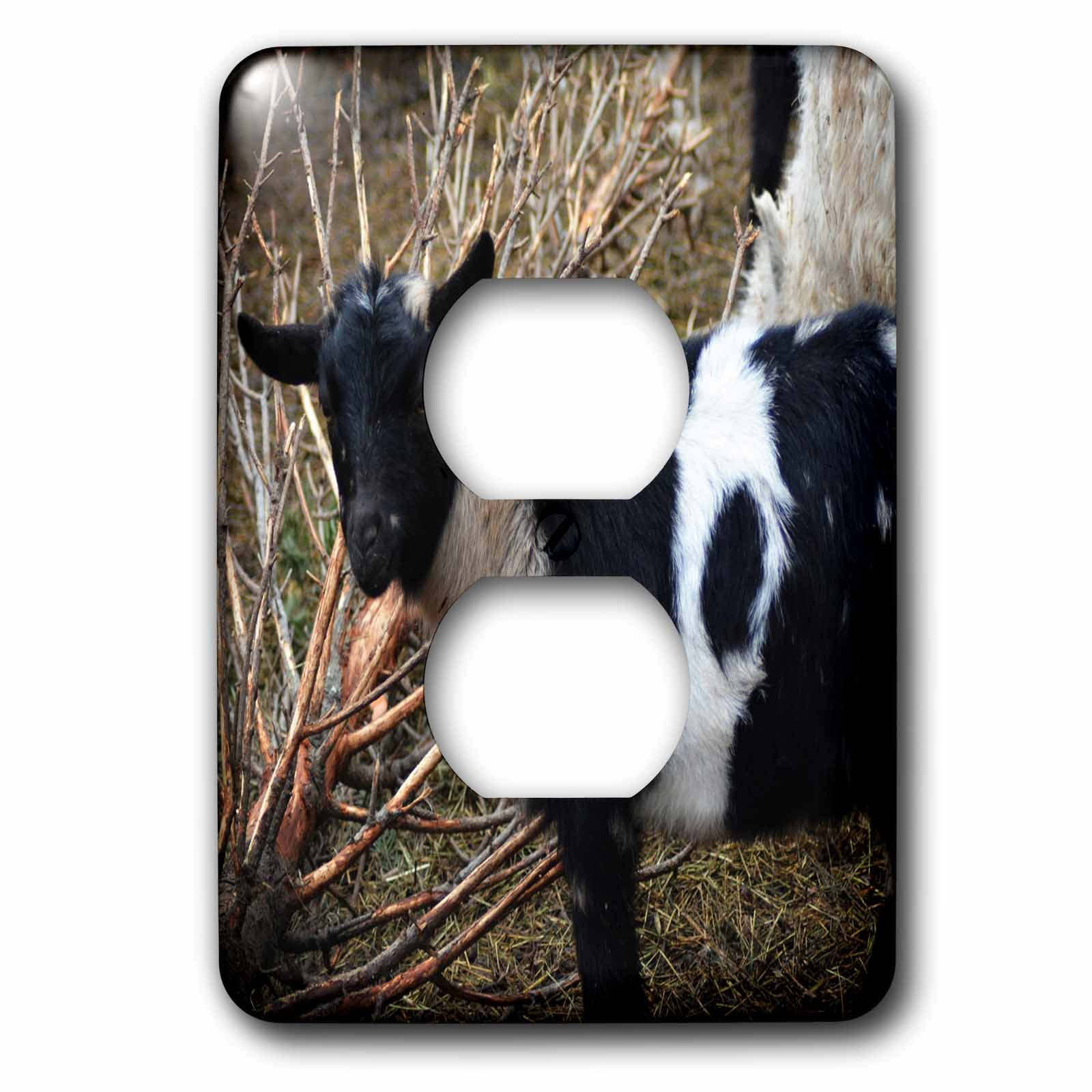 3dRose WhiteOaks Photography and Artwork - Goats - Black Faced Goat is a photo of a goat with a black face - Light Switch Covers - 2 plug outlet cover (lsp_265341_6)