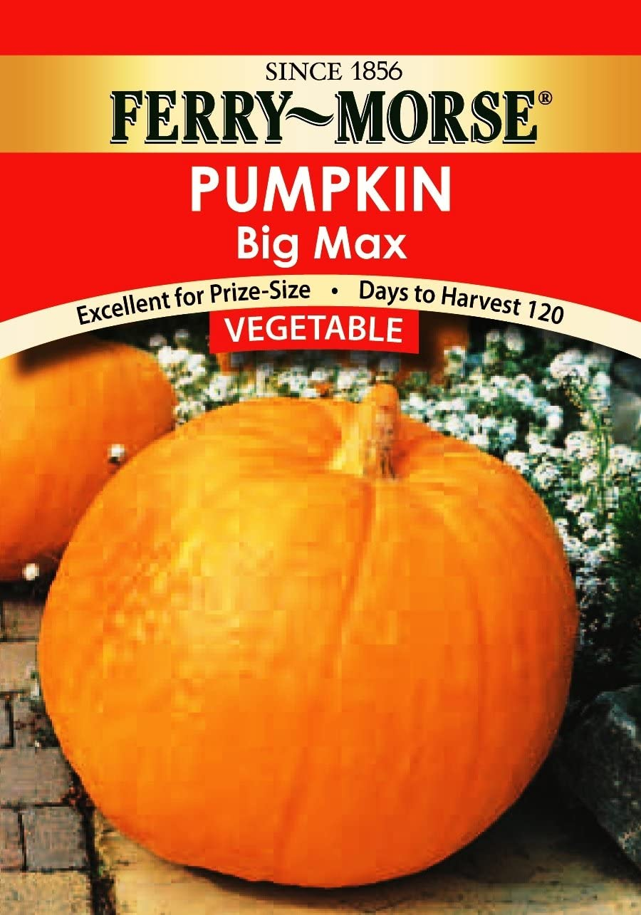 Ferry Morse Pumpkin Big Max Vegetable Seed