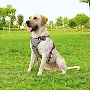 Cinf Summer Dog Harness No-Pull Walking Light Pet Harness Not Tight Adjustable Outdoor Breathable Pet Vest Reflective Oxford Material Vest Easy Control Small Medium Large Dogs Pet Supplies-Red