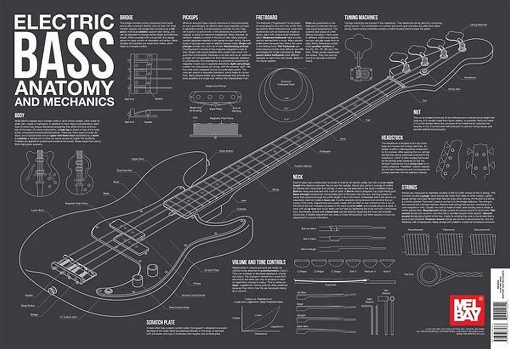 Electric Bass Anatomy and Mechanics Wall Chart: Charlie Lee ...