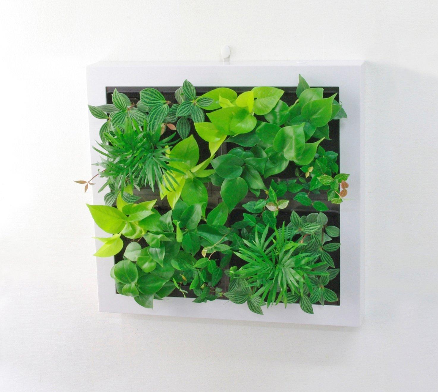 ミドリエ GREET グリート 観葉植物 インテリアグリーン ホワイトーB B0152PDQEO