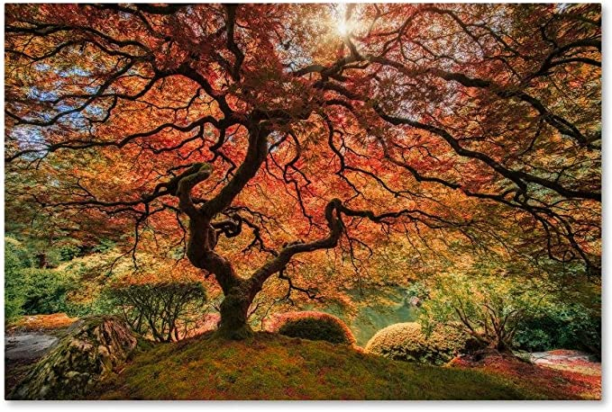 Amazon Com The Tree Horizontal By Moises Levy 22x32 Inch Canvas Wall Art Posters Prints