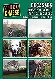 Bécasse : Chasses d'Irlande, terre de bécasses - Vidéo Chasse - Chasse du petit gibier