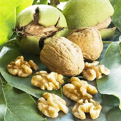 HOTUEEN Nutrition Fruit Green Walnut Tree Seeds Organic Fruits Garden Plants Trees : Garden & Outdoor