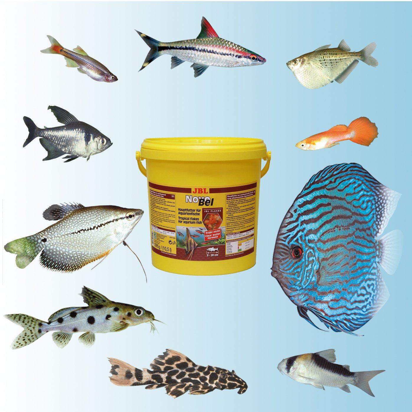 JBL - Alimentación completa para todos los peces de acuario: Amazon.es: Productos para mascotas