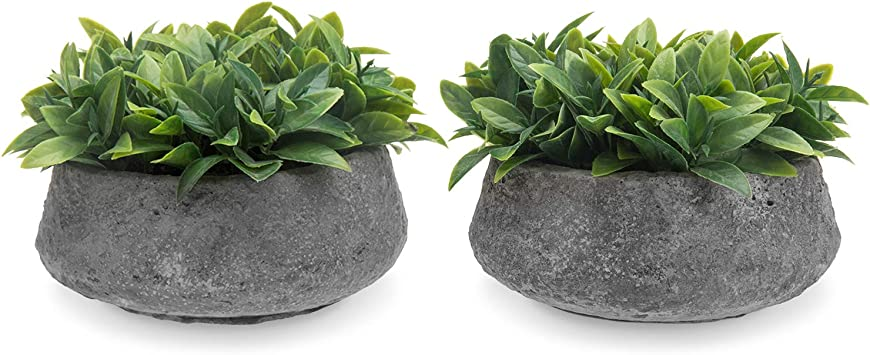 Mygift Mini Artificial Faux Boxwood Plant In Rustic Concrete Pots Set Of 2