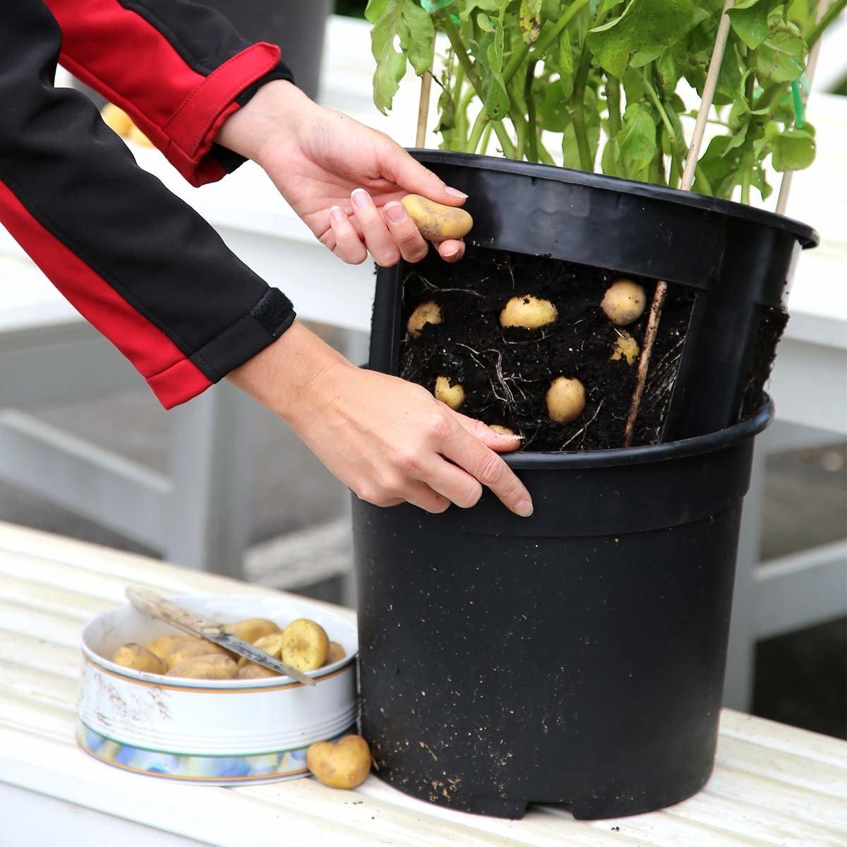 einfaches pflanzen von Kartoffeln auf dem Balkon oder der Terasse tomgarten PotatoPot inklusive 3x K/üchenkr/äuter-Saatgut inklusive passendem Kr/äuter-Saatgut