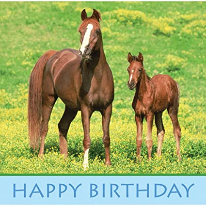 Amazon Wild Horses Paper Happy Birthday Lunch Napkins 16 Per
