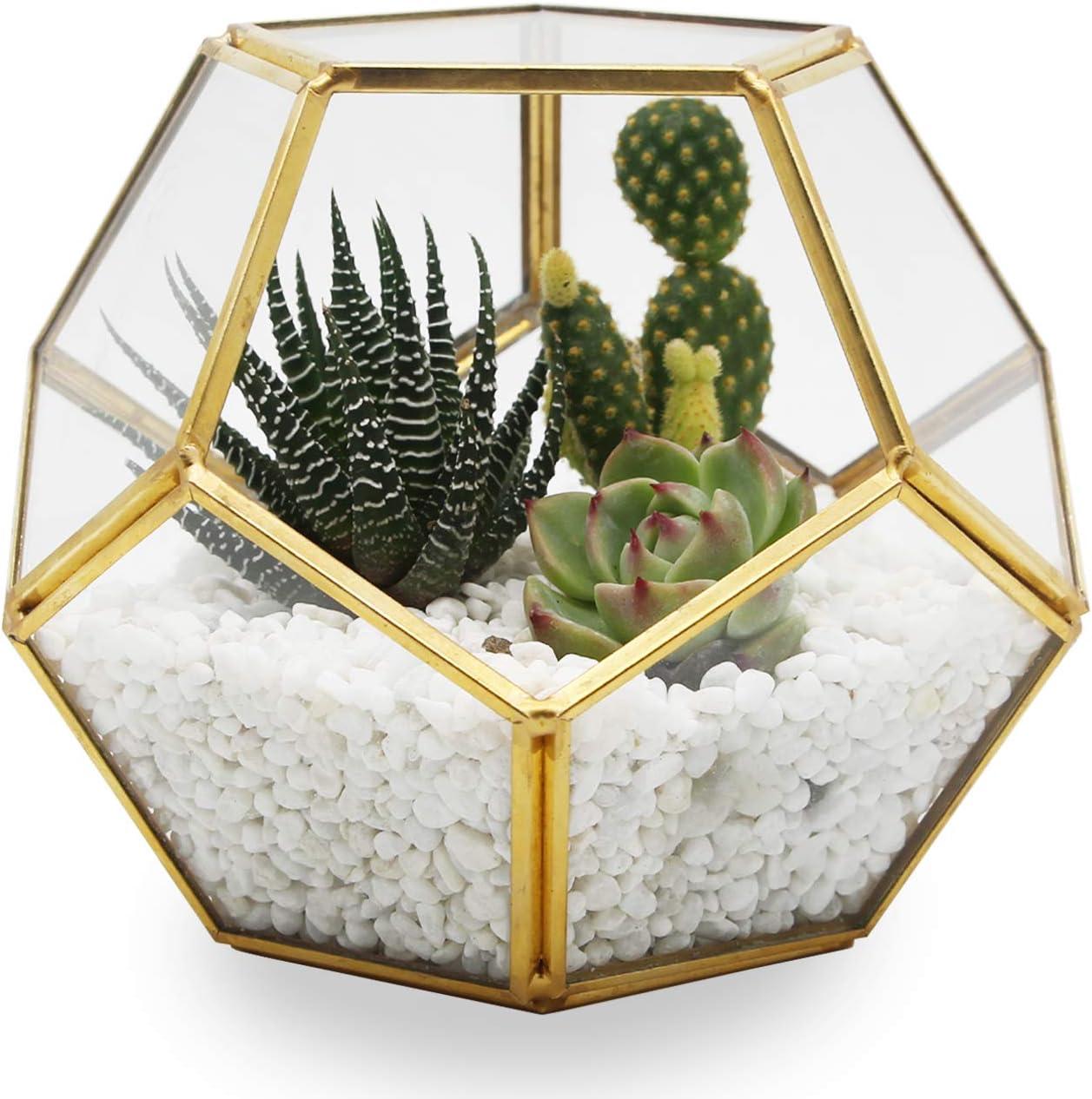 1x Geometric Moss Succulent Glass Terrarium Plant Pot Display Flower Vase Holder