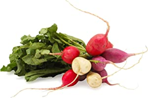Easter Egg Radish Seeds, 250 Heirloom Seeds Per Packet, Non GMO Seeds
