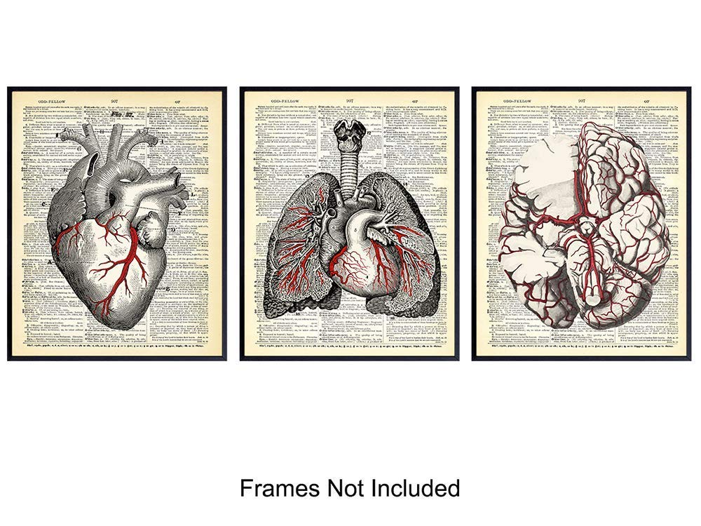 Vintage Anatomy Organs Goth Dictionary Decor - 8x10 Unframed Upcycled Prints Set for Home or Doctor Office - Unique Steampunk Home Wall Art Decor - Gift for Doctor, Nurse, PA, Med Student