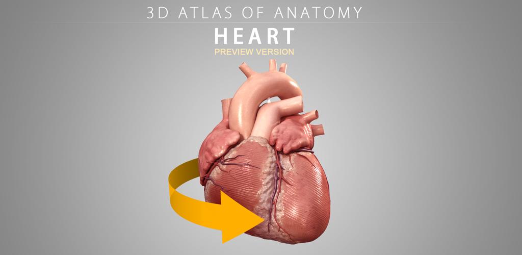 Amazon.com: Heart - 3D Atlas of Anatomy - Lite Version: Appstore for ...