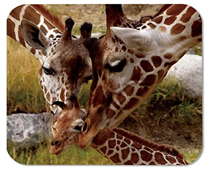 1a836730cf80d baby giraffe family woodland animals Mouse Pads Customized Made to Order  Support Ready 9 7/8 Inch (250mm) X 7 7/8 Inch (200mm) X 1/16 Inch (2mm)  High ...