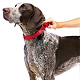 "PetSafe Martingale Collar 1"" Large, Red"