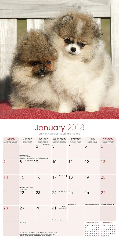 Pomeranian Calendar Dog Breed Calendars 2017 2018 Wall