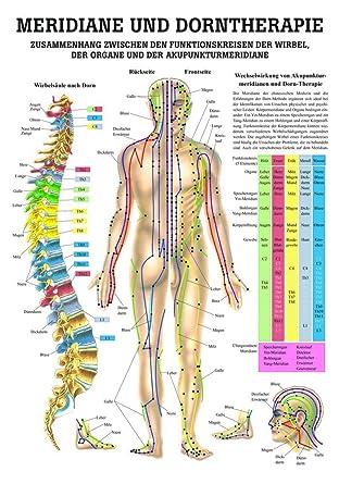 Ruediger Anatomie MIPO44LAM Meridiane und Dorntherapie Tafel, 24 cm ...