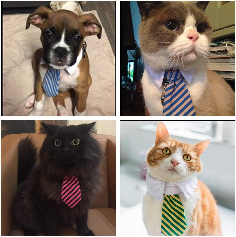 Cuello con corbata para perros pequeños, gatos o cachorros, de la ...