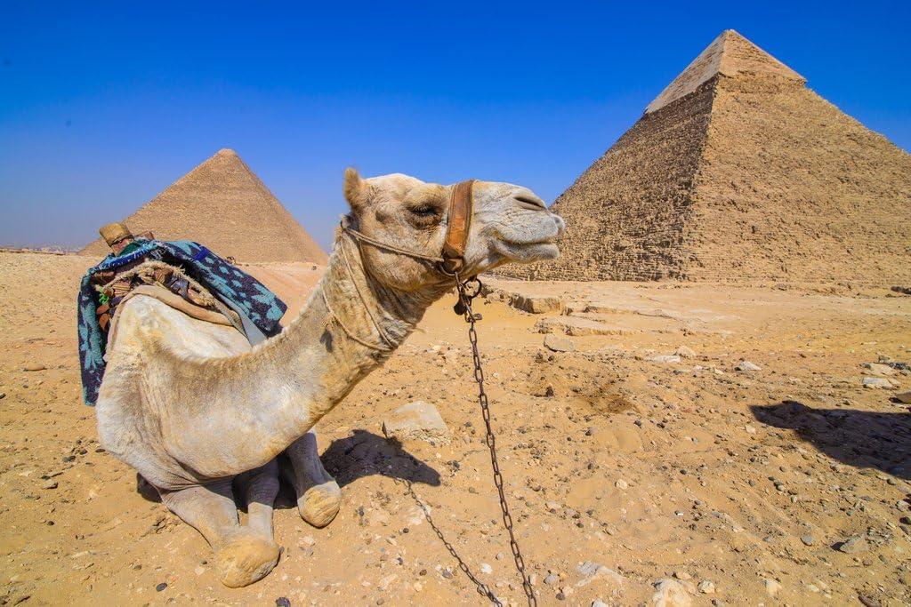 Camel Guarding Pyramids Giza Egypt Landscape Photo Photograph Cool Wall Decor Art Print Poster 18x12