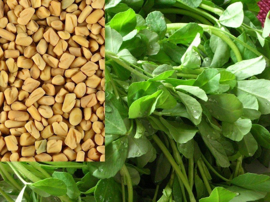 Fenugreek Herb (Trigonella foenum-graecum) Seeds, The Main Ingredient Curry Recipes (5 Pounds, 144K Seeds)
