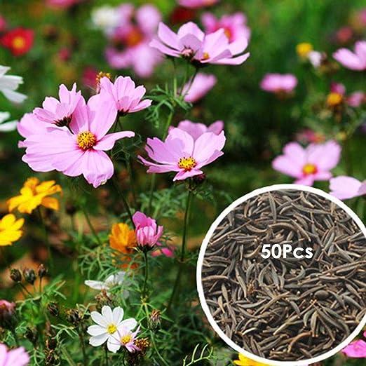 Amazon Com Kouye Gardenseeds Cosmos Flower Seed Mix Flower Bonsai