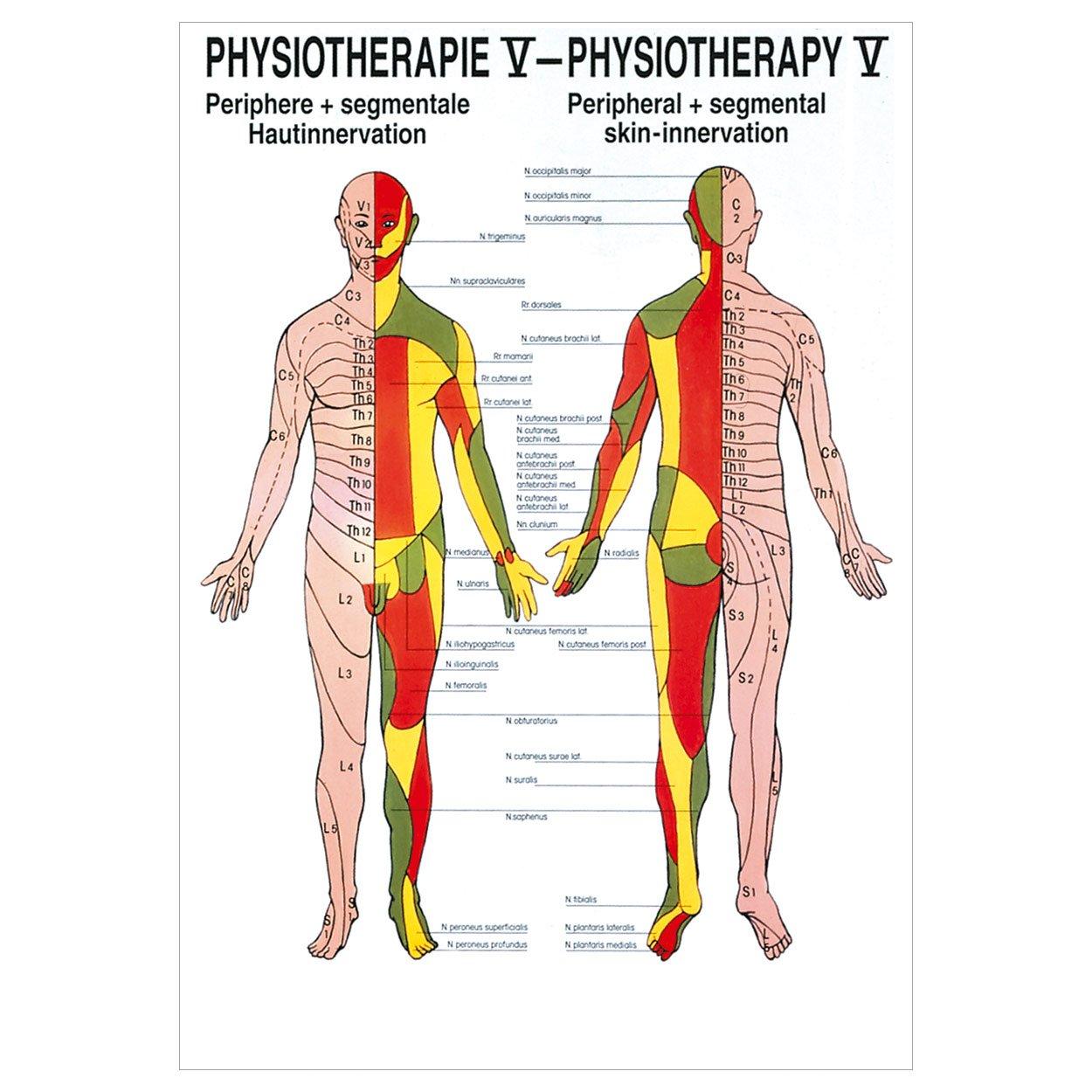 Hautinnervation Poster Anatomie 70x50 cm medizinische Lehrmittel ...
