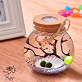 LED Marimo Glass Jar - Multi Colored Light Jar- Thick and Durable Glass- Use for Creative Wedding Decor, in Your Home or Garden- Special, Original and Unique Gift