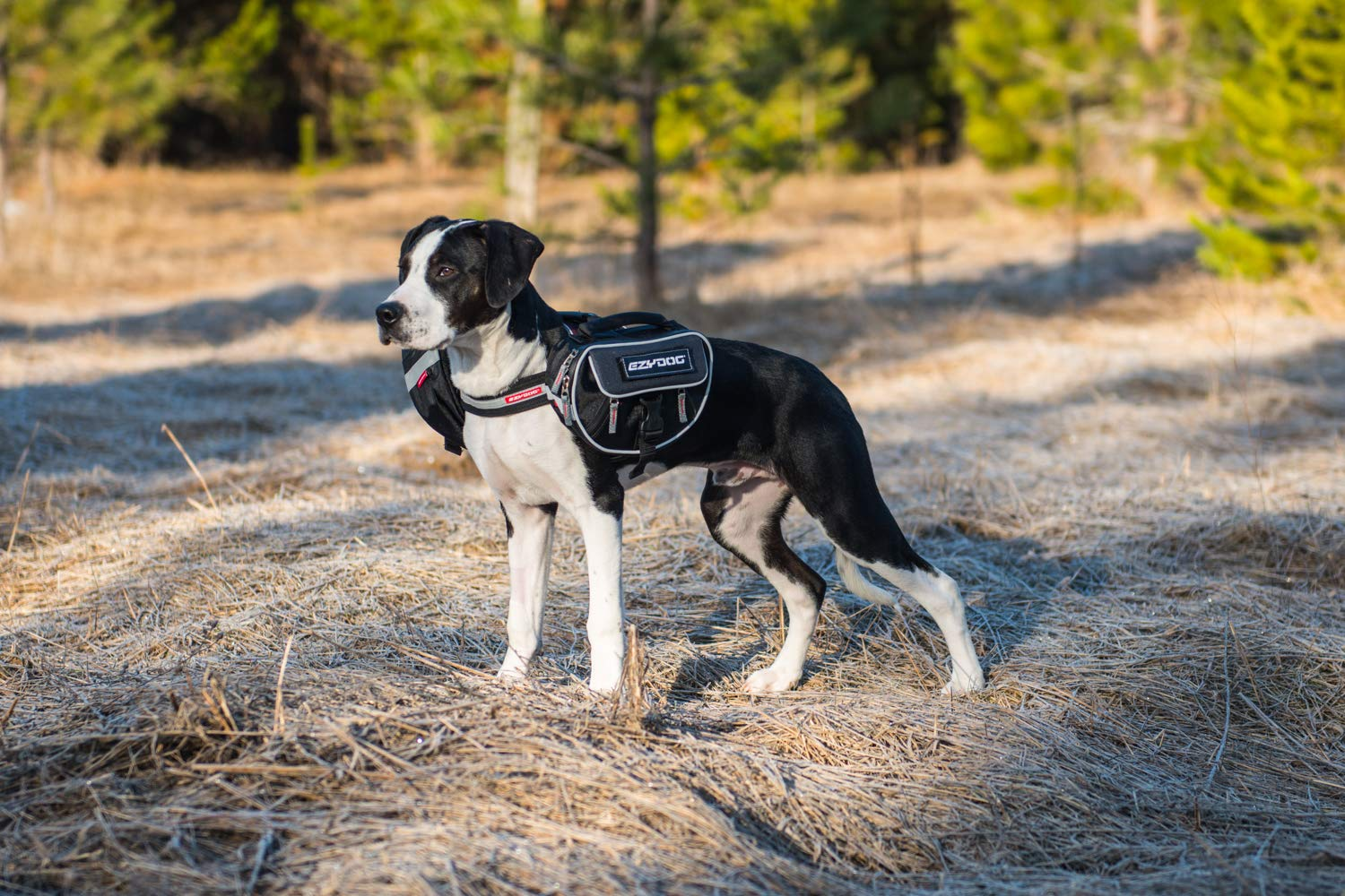 EzyDog Trail-Ready Saddle Bags for The Convert Dog Harness(Not Included)- Two Dog Backpacks with a Quick and Easy Attachment System - Superior Storage Capacity and Innovative Design (Large)