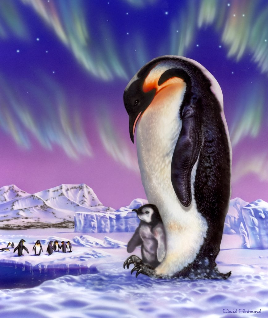amazon com new signature collection queen size penguin royal